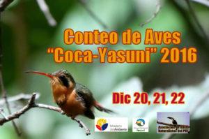 Christmas Birdcount Coca-Yasuni @ Francisco de Orellana | Coca | Orellana Province | Ecuador